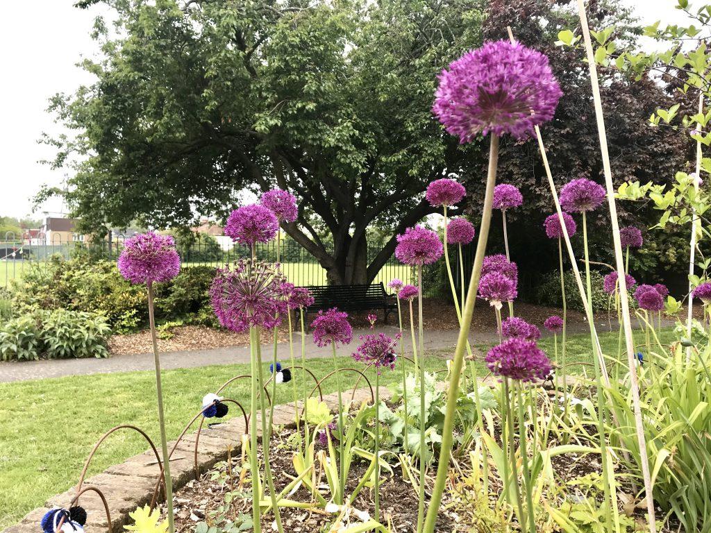 Colliers-Wood-Parks-and-Green-Spaces-Volunteers-The-Rec-Memorial-Garden