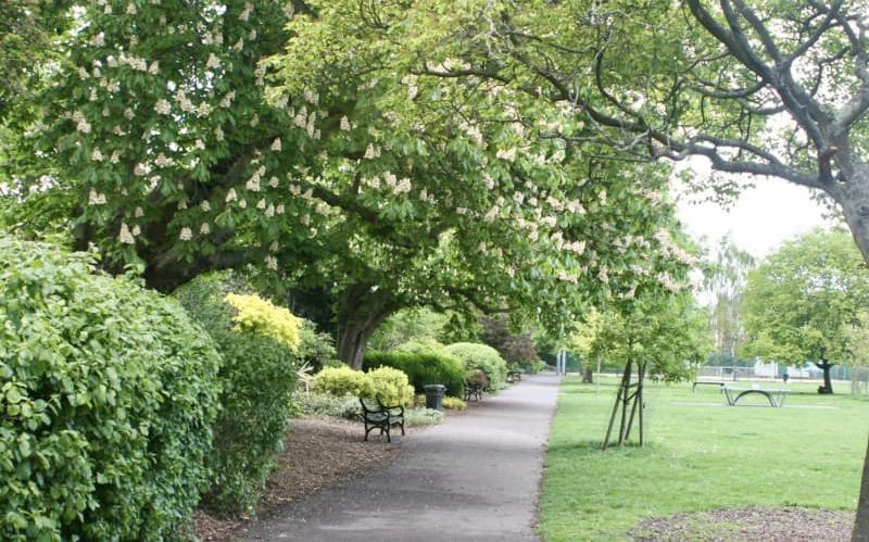 Colliers-Wood-Parks-and-Green-Spaces-Volunteers-Trees-In-The-Rec
