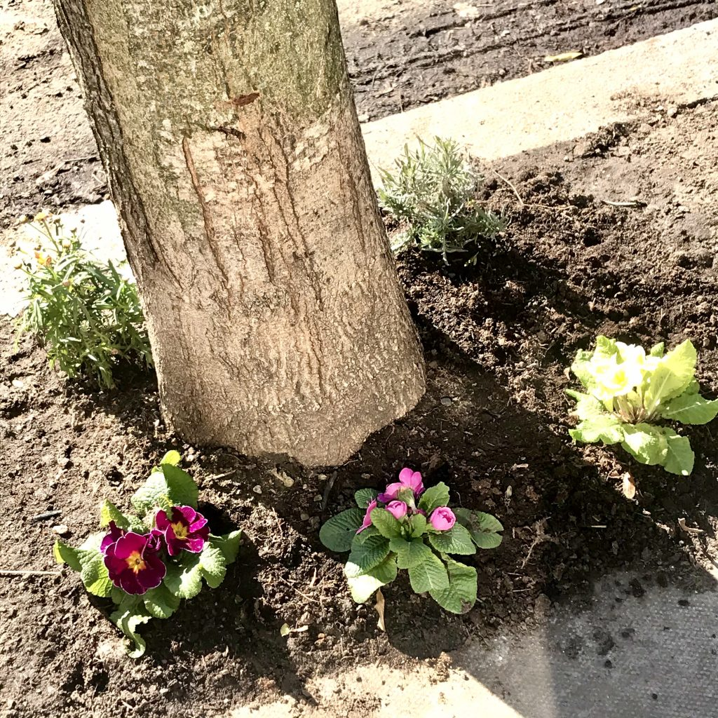 Colliers-Wood-Parks-and-Green-Spaces-Volunteers-Tree-Base-Planting